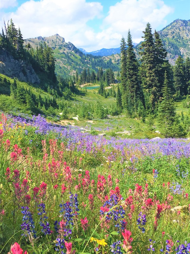 Beautiful View of unnamed Lake through Colorful Wildflowers at Naches Peak Loop trail