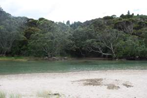 lonely-bay-coromandel