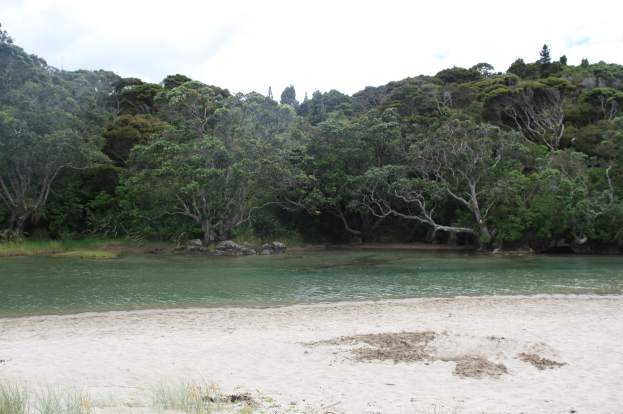 lonely-bay-coromandel NZ