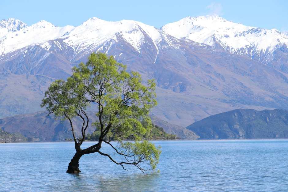 Wanaka tree NZ