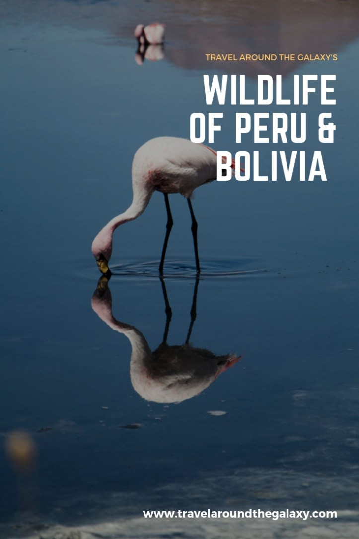 Wildlife of the Bolivia and Peru
