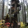 The Enchanted Forest & Around Revelstoke