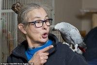 Пока хозяйки нет дома: попугай, любящий сквернословить, делает покупки на Amazon