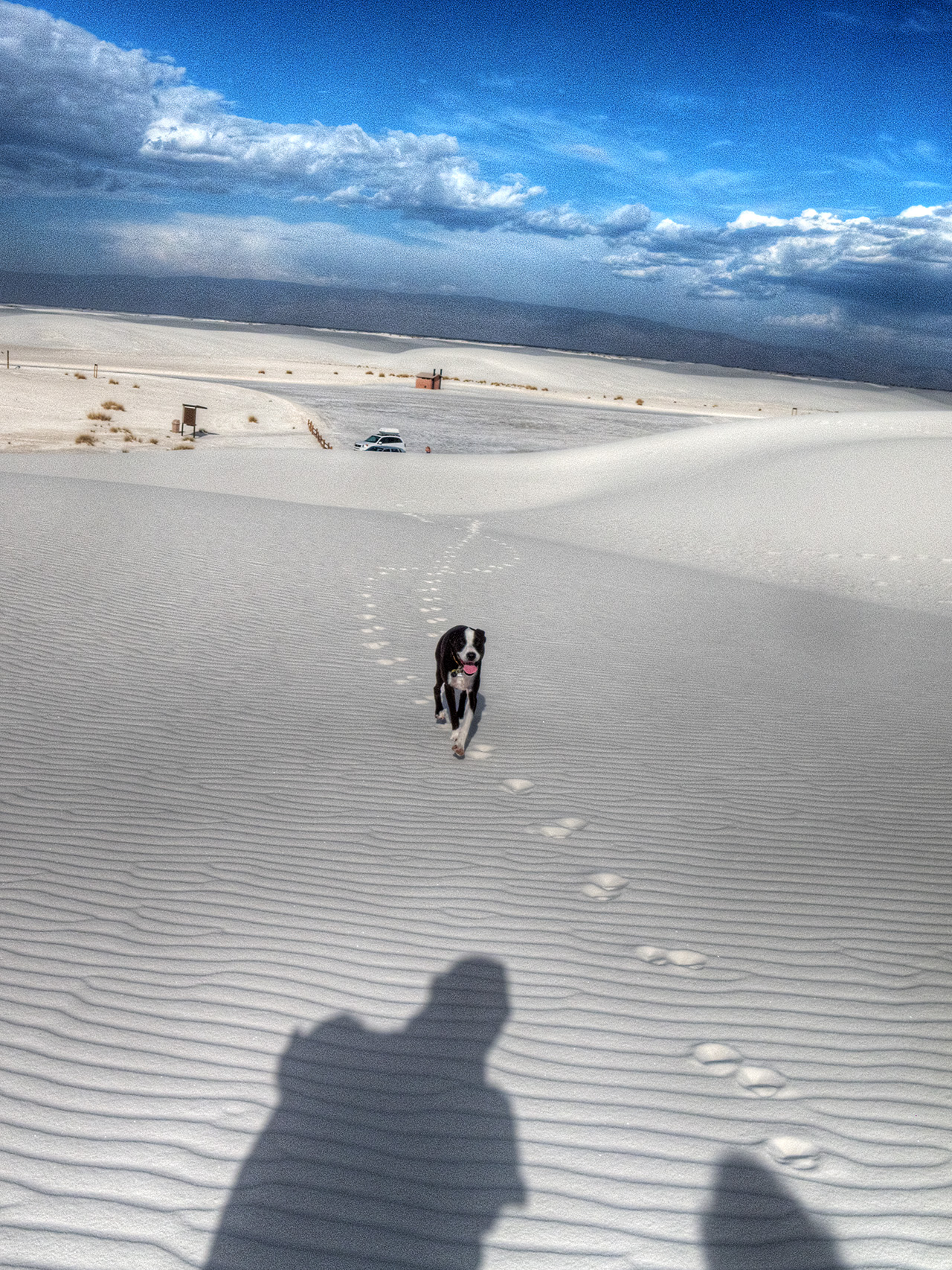 Hobee at White Sands National Monument, New Mexico.