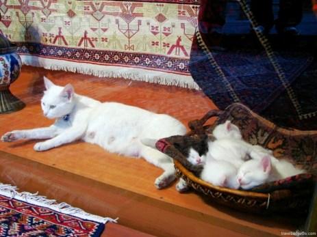 Pisica otomană şi puii ieniceri