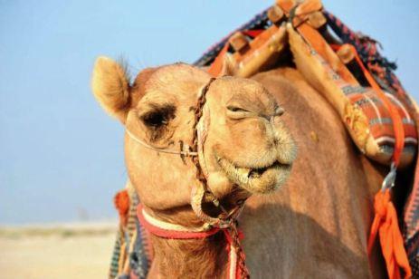 Frumuseţe qatareză