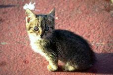 Wild Cat, I think I want you ...!