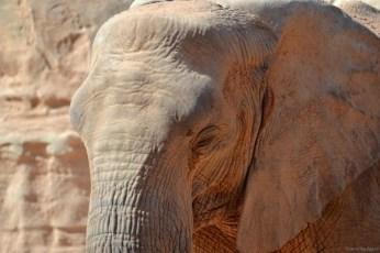 Elephant @ Bioparc Valencia