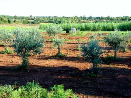Pământul roșiatic al Istriei