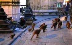 Dis de dimineaţă. La un semn, toţi maimuţoii au pornit într-un suflet într-o direcţie. Se servea micul dejun ...