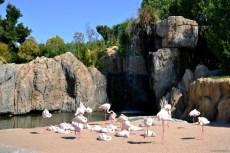 Parcul de flamingo