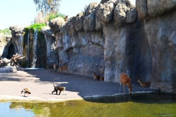 Mai multe specii împart acelaşi habitat