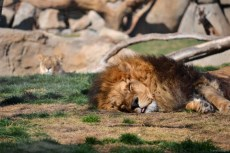 Pe leu nu-l interesa mai nimic