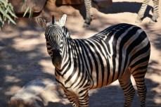 Toate animalele de la Bioparc sunt exemplare frumoase şi sănătoase