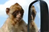 Ne-am pozat cu maimuțoii din Gibraltar