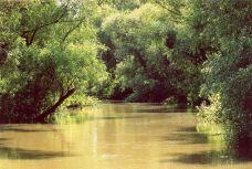 Delta Dunării în 1991
