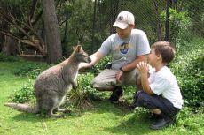 Melbourne - Hai noroc, Wallaby!
