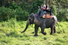 Nepal - Prin jungla din Chitwan