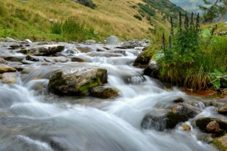 Pe Valea Pelegii