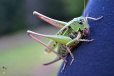 ... și am admirat biodiversitatea
