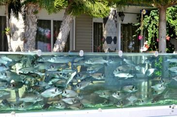 Gardul cu pești