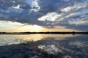 Apus în Delta Dunării