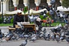 Porumbeii din Piața Aristotelis