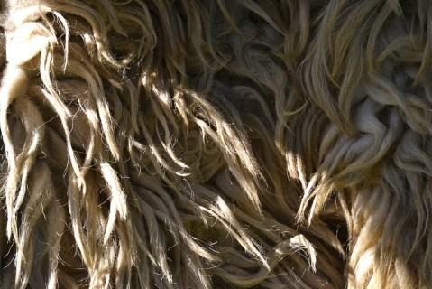 Cojocul de lână, un accesoriu nelipsit