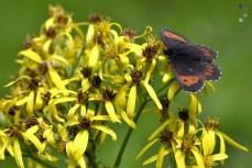 Tabăra de biodiversitate - Comandău