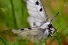 În Parcul Național Domogled din Valea Cernei