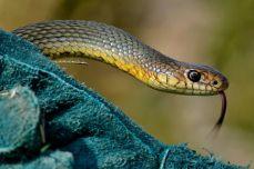 Șarpele Rău - Tabăra de biodiversitate, Frumușani