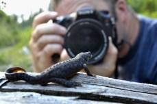 Fotografiind un triton de munte în tabăra de biodiversitate de la Comandău
