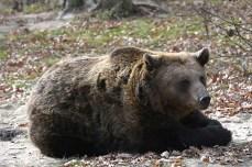 Întâlnire cu Moș Martinii de la sanctuarul de urși din Zărnești