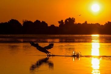 Dimineața pe lacul Fortuna