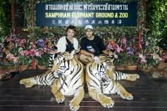 Cu tigrii bengalezi