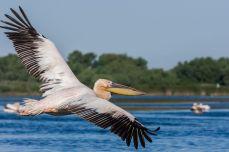 Biodiversitate - Delta Dunării