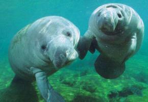 גלו את עולם החי של פלורידה   Experience Florida's Wildlife