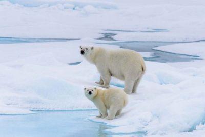 AUTH - TP Silversea arctic polar bears
