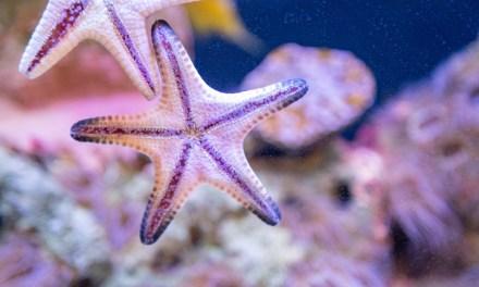 Aquarium marin, à la portée de tous?