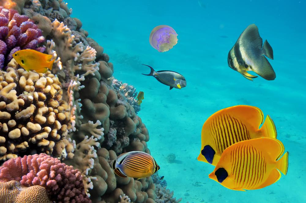 scuba diving plongee sous-marine en RD