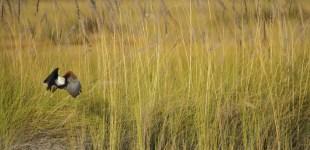 The Okawango Delta