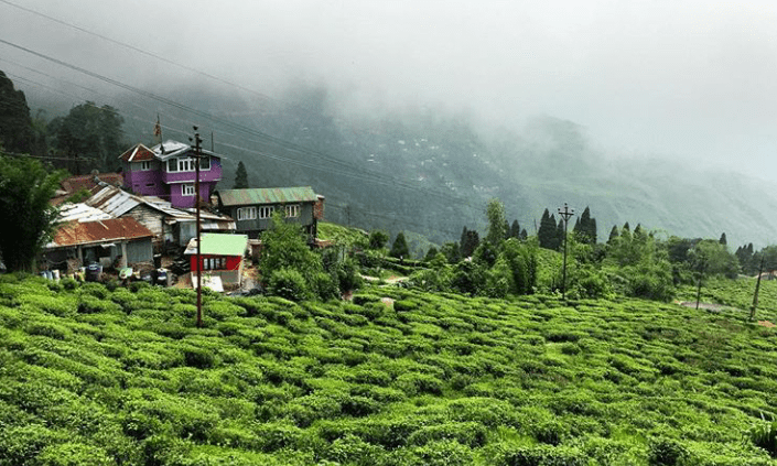 Happy valley tea garden