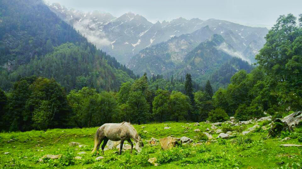 Horses in Parvati Valley