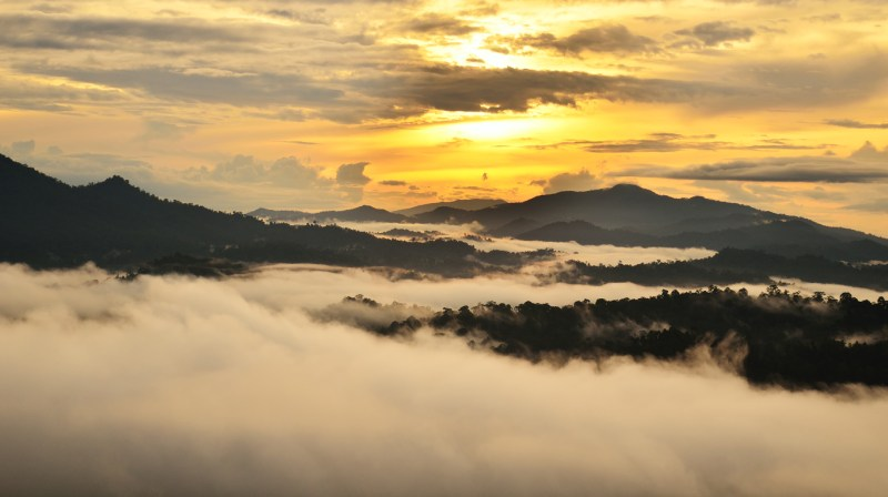 Sunrise over Dipterocarp rain forest in Borneo