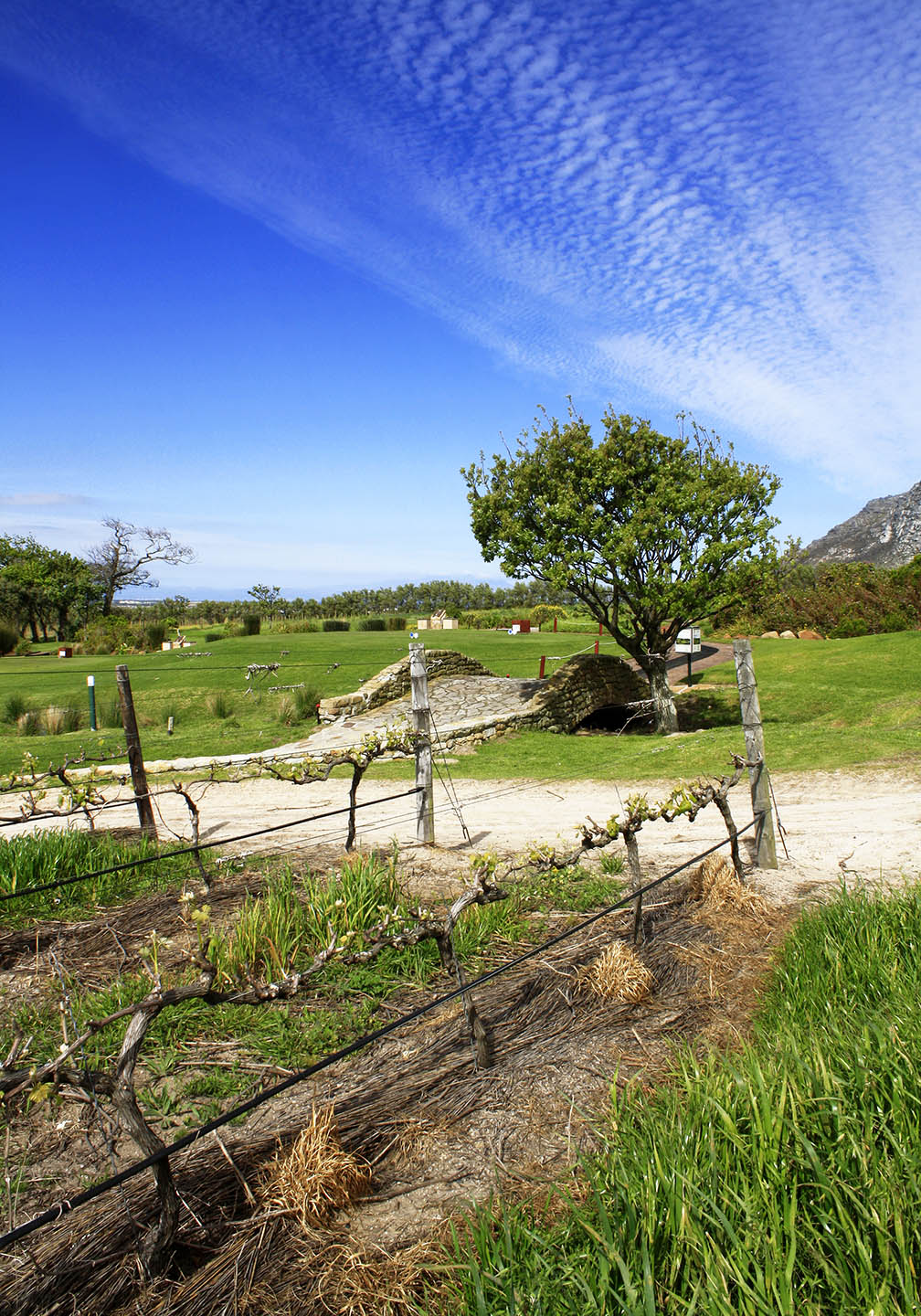 Golf course at Steenberg Mountains in the Constantia Valley