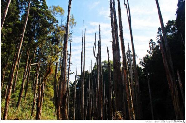 ▌旅遊▌南投不一樣的夢幻景點,想看得碰碰運氣,枯水期「忘憂森林」