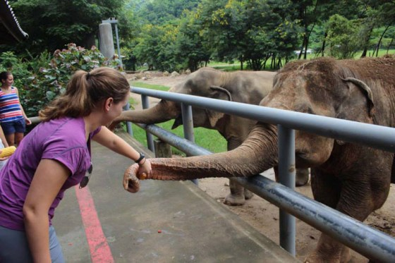 Making friends at Elephant Nature Park in Chiang Mai by Evanne Allen of Poplar Travels