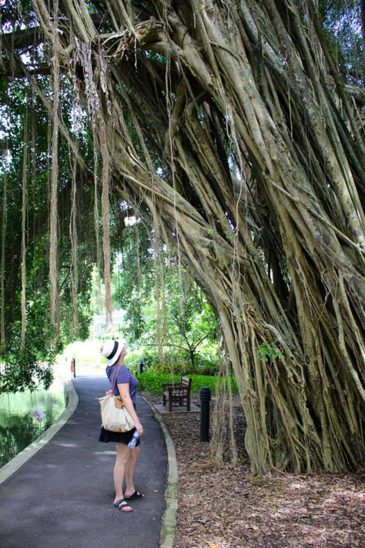Taking in the trees in The National Botanical Garden in Singapore with Evanne Allen of Poplar Travels