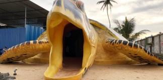 海龜保育中心