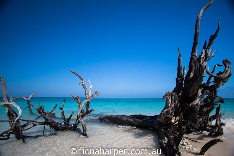 Lady Musgrave Island beach, Great Barrier Reef  QLD Australia